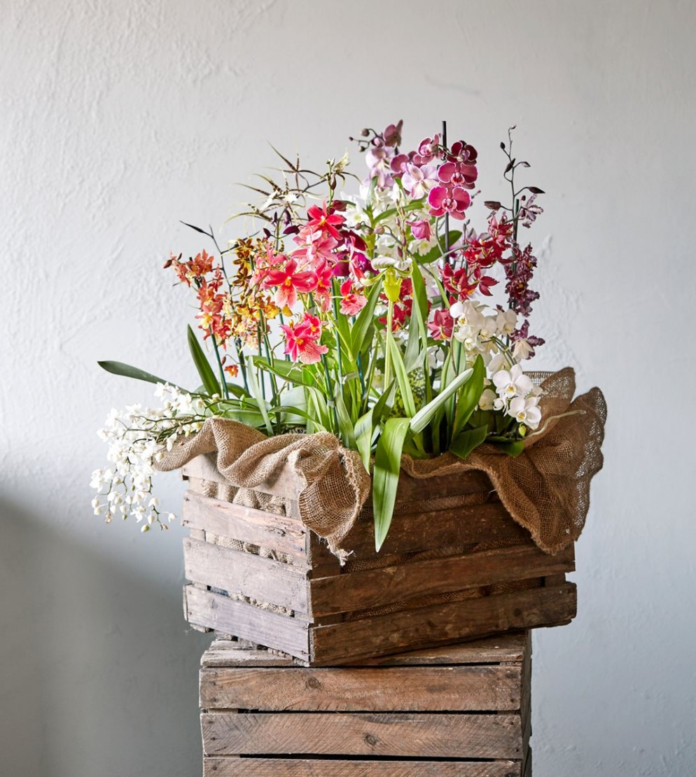 piante-da-interno-3. blomsterlandet.se-living-corriere