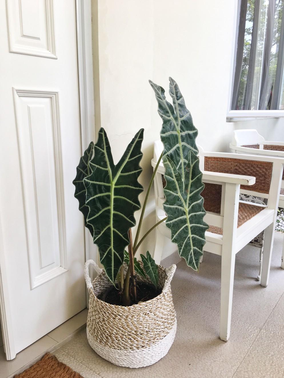 piante-da-interno-8. via pinterest-living-corriere